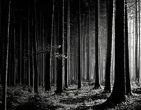 November Forest │ pt. 1