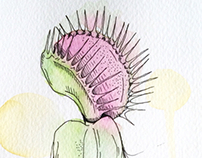 Venus fly trap study