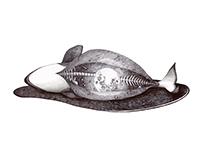 Cetacean Stranding