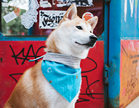 Sharik-dog accessories summer 2016