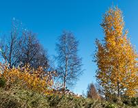Ockelbo (My Home Town) During Autumn ! 2