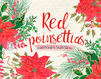 Watercolor red poinsettias
