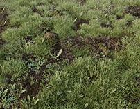 York - wild grass (full CGI)