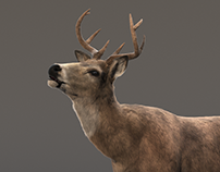 Deer animated 3d model