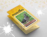 (AVA) Pigeon Problem | Tri-fold Informative Brochure