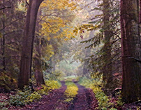 Walk in the old forest
