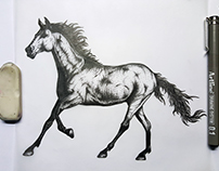 Stallion Tattoo Design