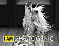 Nikon- PHOTOGRAPHY