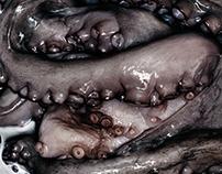 Octopus portraits