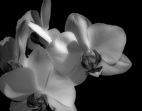 Black and White glimpses...