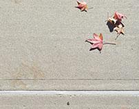 Digital Photography: Landscape Series