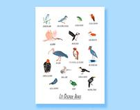 Les oiseaux rares