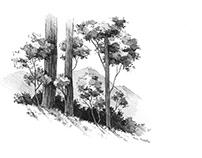landscape - trees