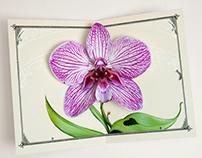 Purple Zebra Orchid Pop Up Card