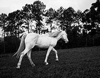 LIKE WHITE HORSE