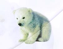 Vectoriel Polar Bear