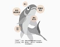 Infographic / introduction of Taiwan shoveljaw carp