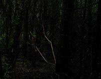 Entre los bosques.