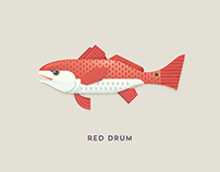 New Orleans Seafood Illustrations