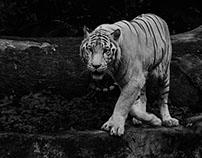 Zoo Photography