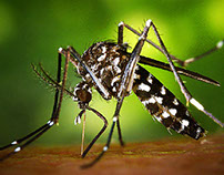 Man in Alaska Tests Positive for Zika Virus