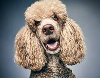 Glamour Dogs | Photos by Jaap Vliegenthart