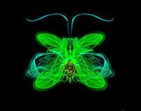 Entomologie Horlogère