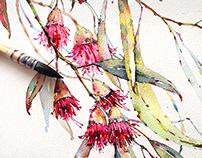 Eucalyptus in watercolor