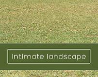 Intimate landscape