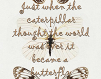 Butterfly Fly Away