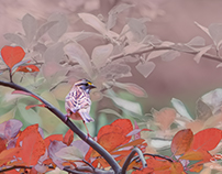 White-throated Sparrow with Red Leaves, Central Park 10