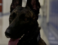 The Story of Meadow - CCTEC's New Security Dog