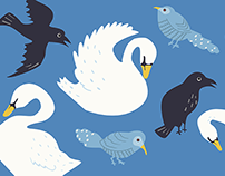 Work | Illustrations for An Article about Birds