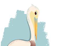 Pelecanus Occidentalis -- Brown Pelican