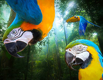 World Wildlife Foundation Brazil