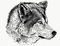 Rue, Yamnuska Wolfdog (Profile)
