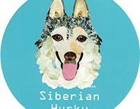 026 | Siberian Husky 2