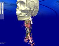 3D anatomic viewer (thyroid)