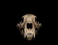 Skull Photography - Vanitas