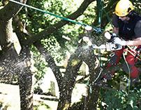 Städtische Baumpflege - mit Seil und Säge