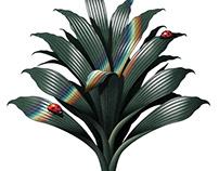 Dracaenas - Botanical illustration