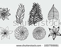 stock-vector-tropical-leaf-and-flower-graphic-design