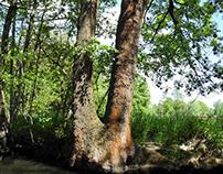 In Wald und Wiese und Wasser