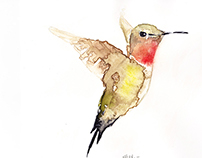 WATERCOLORS BIRDS- 2015