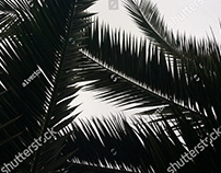 Palm leaf images 936 palm leaf stock photos, vectors