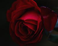 Poly-rose