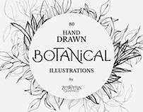 80 Botanical Hand Drawn Illustration