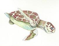 Sea Life Illustrations for VARENOS Brand