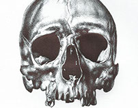 Bic biro drawing of a skull