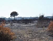 Castel Fusano 2017